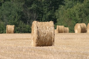 Vacances à la campagne en Vendée